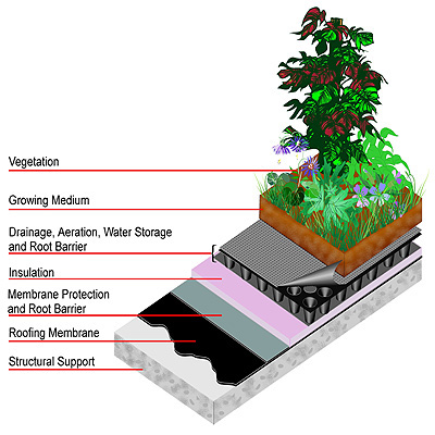 Massachusetts green roofs construction diagram - green roofing contractor MA NH
